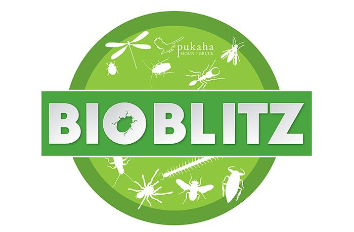 Pukaha BioBlitz Logo Promote PR 700px